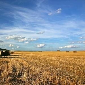 Плодородные земли,  колхозы Черноземья от 100 до 15000Га сельхоз-назначения